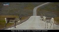 В гости к норвежским троллям - кадр из видеофильма 13