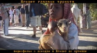 Египет по путевке - видеофильм онлайн 09