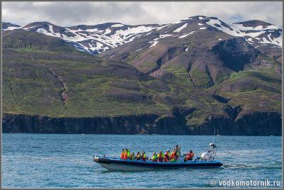 Исландия - выезд на китовое сафари