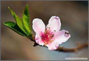 Весна в саду водномоторника