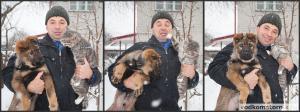 Пес и тигр