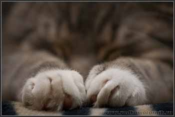 Спящий тигр.