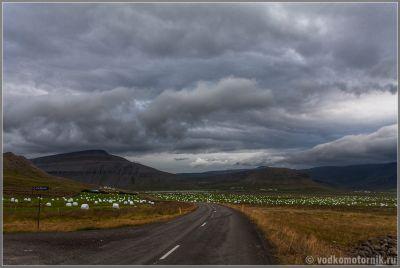Заготовка исландского укропа на зиму. Исландия - Iceland.