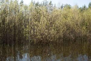 сплав р.Лух Нижегородская обл. весна 2012