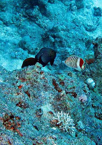 Red sea. 12/2007