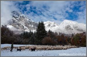 Пастух и стадо баранов, овец и пр. парнокопытных в Альпах