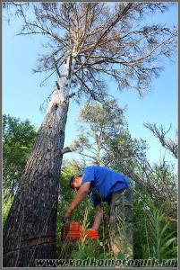 Санитарная чистка леса