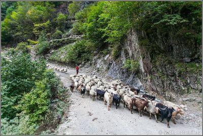 Парнокопытные спускаются с перевала Абано