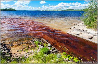 Чайная река в Сяргозеро Карелия