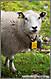 Коза с Mp3 плеером