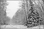 В зимнем лесу. 2008г.
