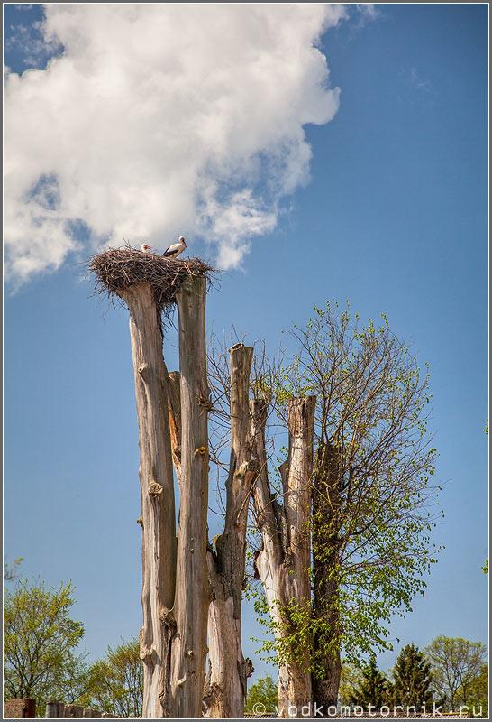 Глушковские дятлы живут высоко